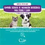 Comenzó la vacunación antirrábica gratuita en los barrios y continúa la campaña en las veterinarias