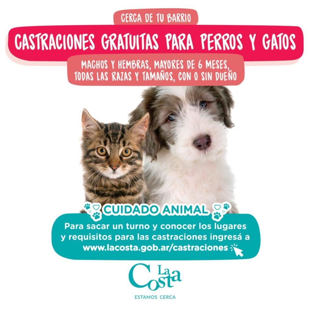 comenzó la campaña de castraciones gratuitas para perros y gatos