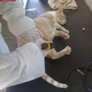 La campaña de castraciones gratuitas para perros y gatos continúa en Santa Teresita